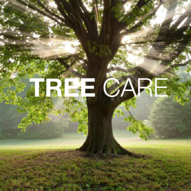 tree care from bio-degradable products
